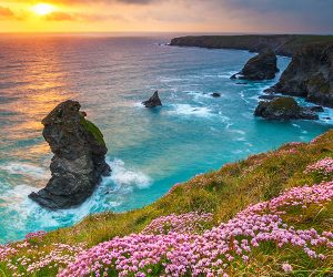 A beach with flowers and a sunset in North Cornwall