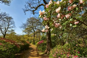 Flowers in spring in the Isabella Plantation at Richmond Park, London