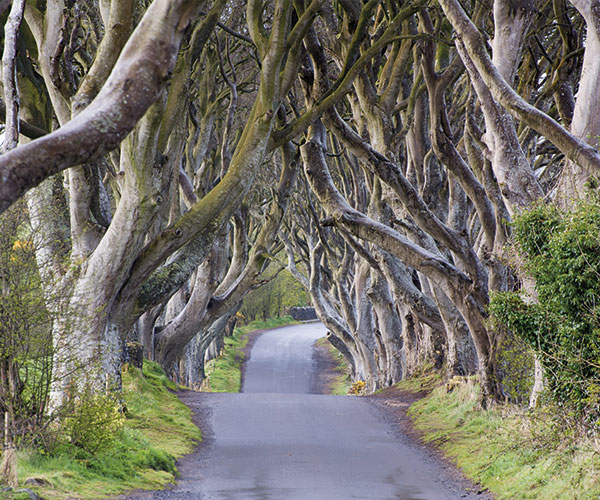 Game of Thrones tour, the dark hedges